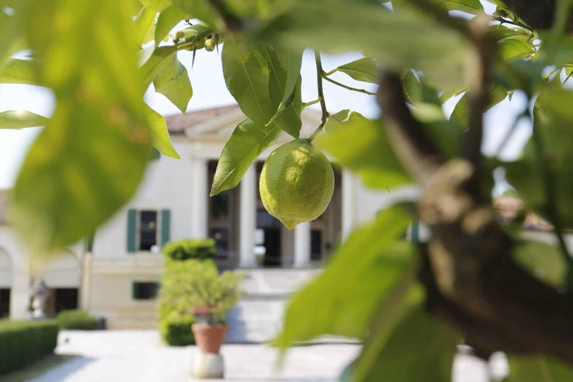 Villa Emo de Palladio