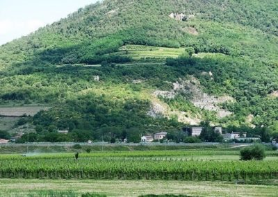 The euganean Hills rise up from a flat earth: they are the result of volcanic eruptions millions of years ago.