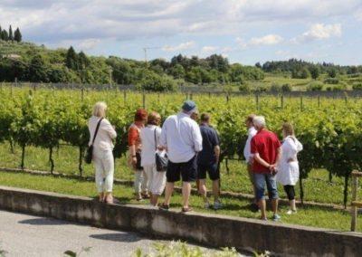Bardolino visit vineyard