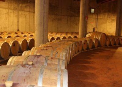 Gambellara wine cellar