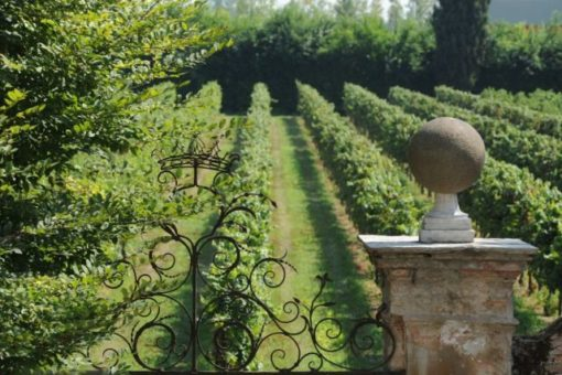 Roncade castle vineyard Piave wine