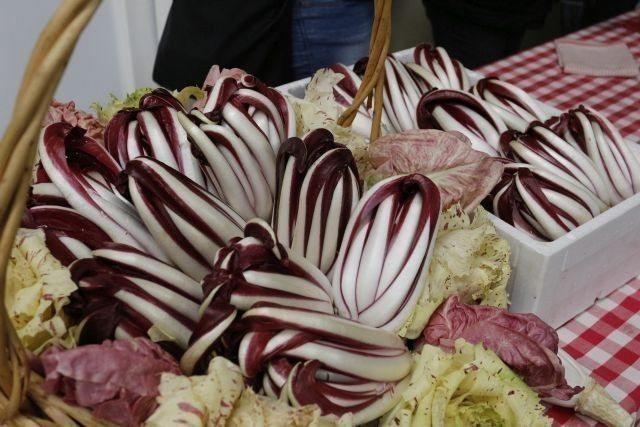 Treviso PGI red chicory varieties
