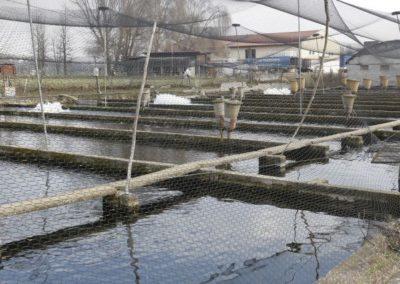 trout breeding Troticoltura Santa Cristina bath along the sile river, in the province of treviso