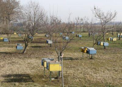 Beekeeping area of Montello